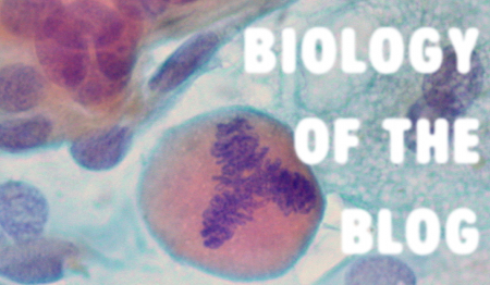 bioblogHEADER-2