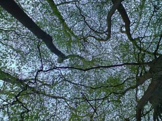 Tree-fractal-photo