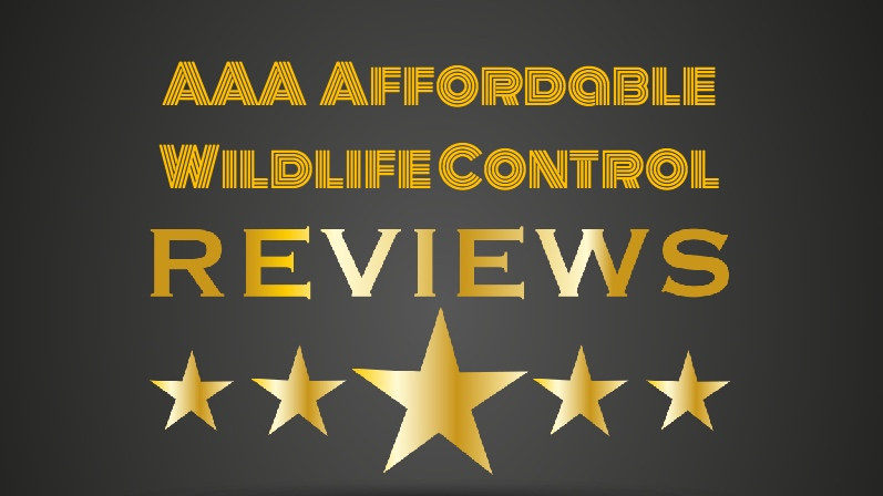 Squirrel Removal Reviews, AAA Affordable Wildlife Control Reviews Toronto