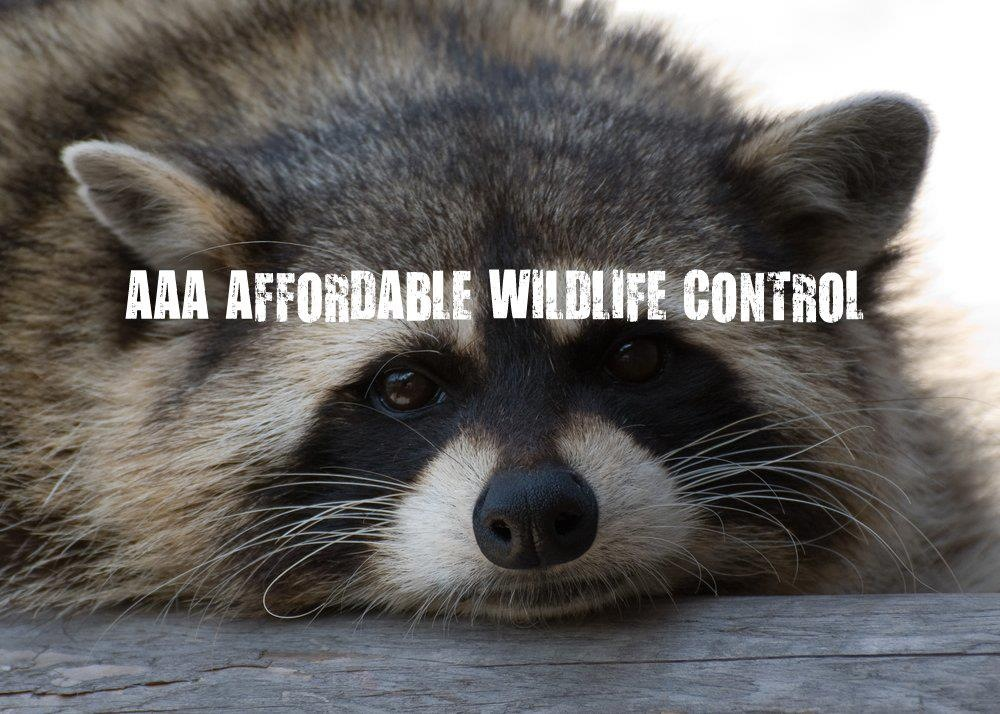 Affordable Wildlife Removal