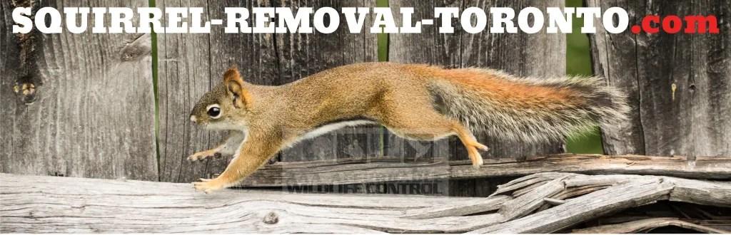 Squirrel Removal Toronto logo, Squirrel Control in Toronto