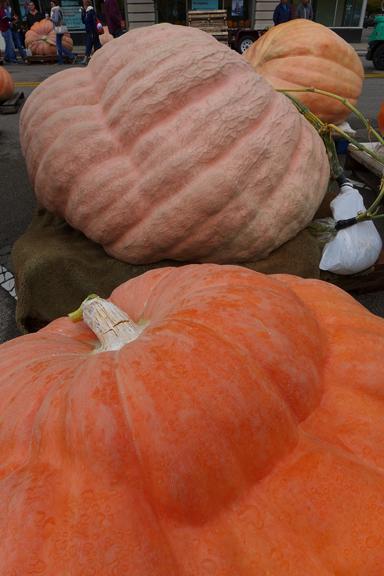 fat pumpkins 3