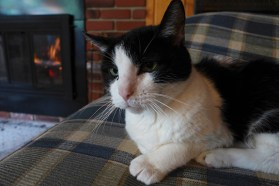 cat by the fire