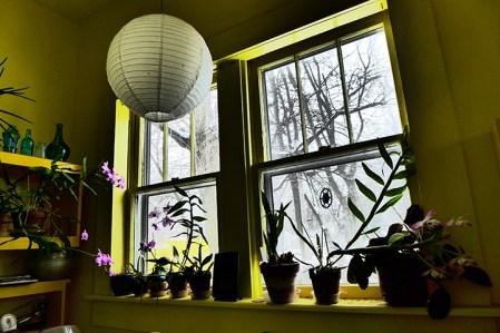 Orchid window