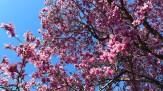 magnolia 31