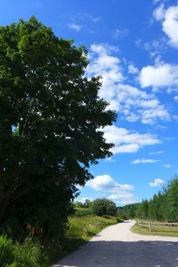 Maple Moon Sugarbush