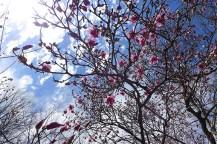 magnolia-03