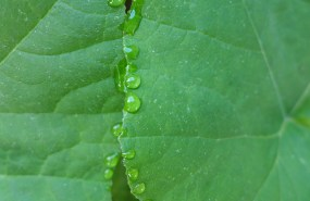 water drops on the squash