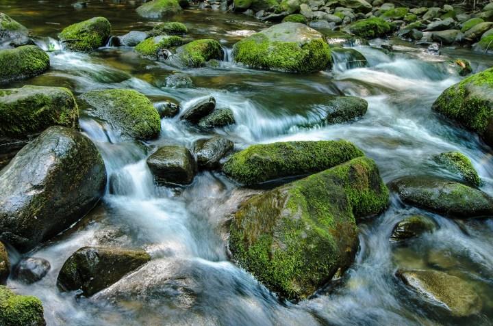https:::www.flickr.com:photos:wileypix_Flow
