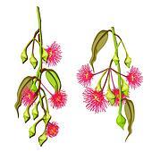 Gum tree Clipart Illustrations. 156 gum tree clip art ... (170 x 170 Pixel)