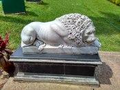 Lion @Napier Museum