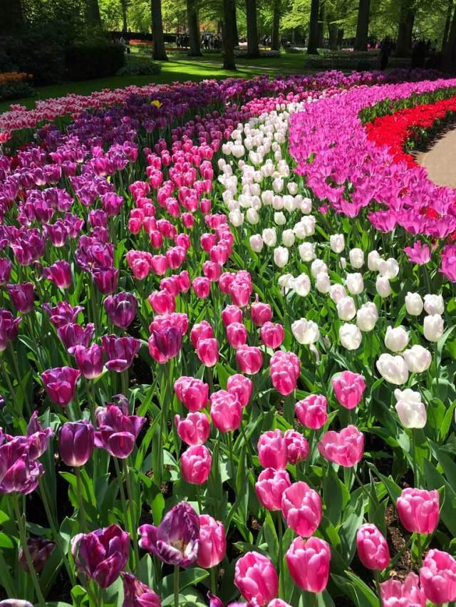 Parco Keukenhof si trova a Lisse, un paesino dell'Olanda a mezz'ora da Amsterdam