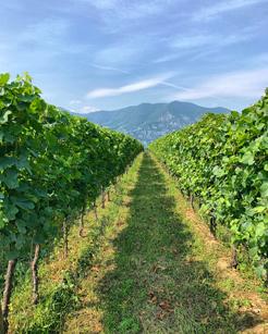 La Franciacorta è una destinazione perfetta per gli amanti del vino