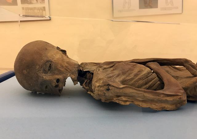 La Mummia di Villa Mirabello è il pezzo forte del Museo Civico Archeologico di Varese