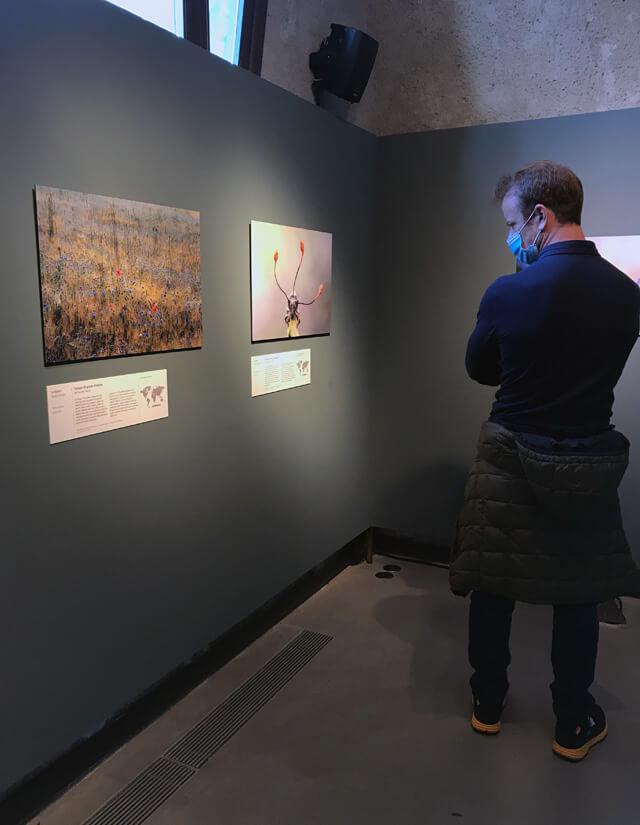 """La mostra """"wildlife photographer of the year"""" era al Forte di Bard nel 2020"""