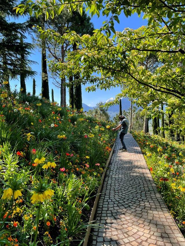 I Giardini Trauttmansdorff hanno prati con strani fiori