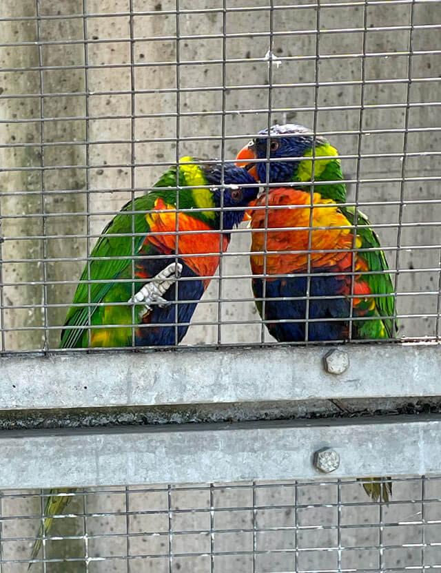 Nella Voliera dei giardini Trauttmansdorff a Merano ci sono tanti pappagalli colorati
