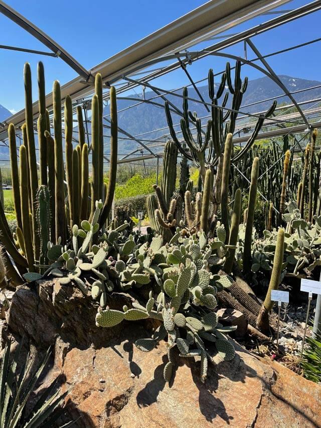 Piante grasse e cactus in Alto Adige? Nei Giardini Trauttmansdorff