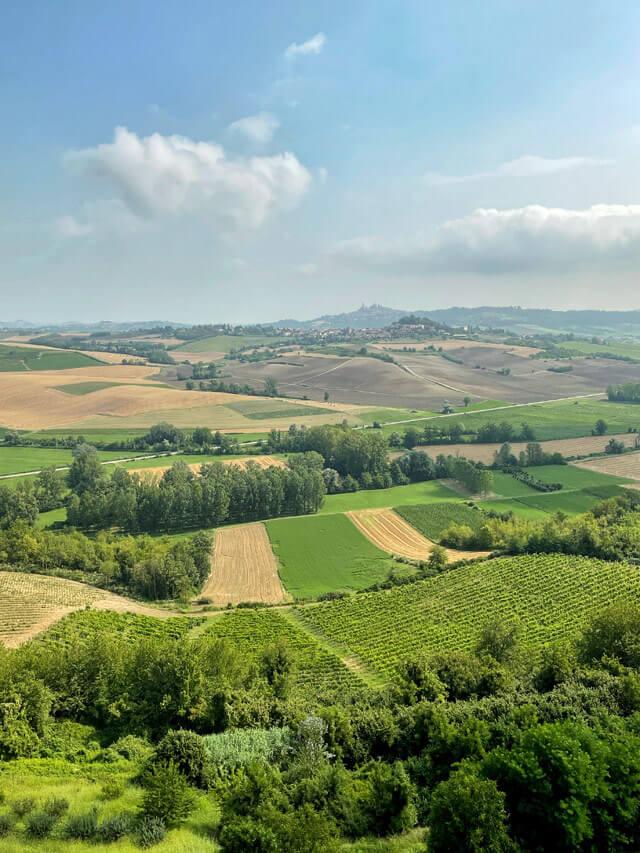 Nelle Langhe Monferrato e Roero trovi vino, torri e colline