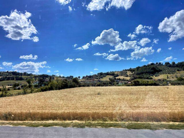 Un paesaggio della Romagna in estate con colline dolci e campi di grano
