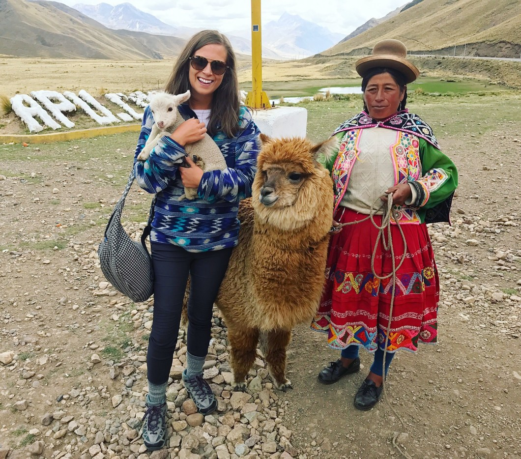 alpaca and lamb in peru