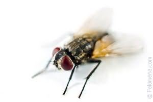 Ce zici de vedere dacă zboară muștele