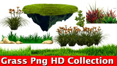 Photo of Grass png For Picsart And photoshop Editing New Collection HD