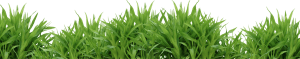 Grass Png HD New