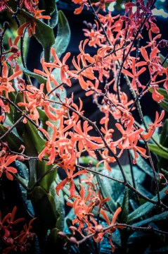 National Orchid Garden - sree is travelling (5)