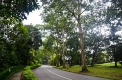 Singapore Botanical Gardens - sree is travelling (6)