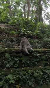 www.sreep.com IMG_5625-169x300 Indonesia, Bali, Ubud: Enjoy the Monkey Forest in the Center of Ubud!