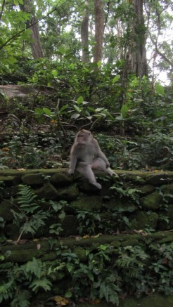 www.sreep.com IMG_5625 Indonesia, Bali, Ubud: Enjoy the Monkey Forest in the Center of Ubud!