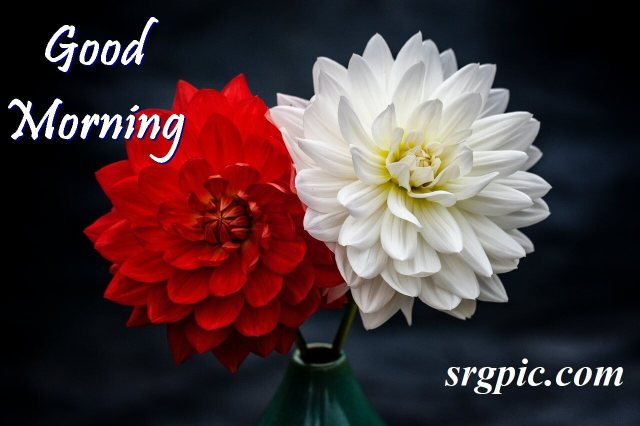photo-of-red-and-white-positive-morning-quotes