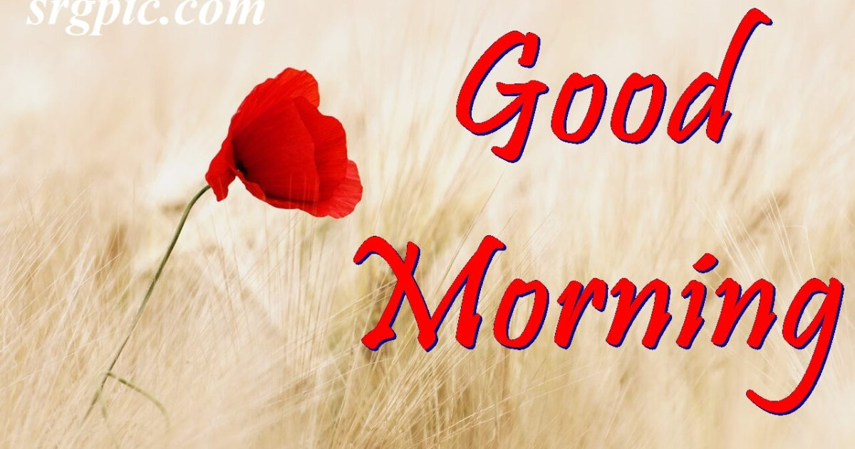 red-field-summer-positive-morning-quotes