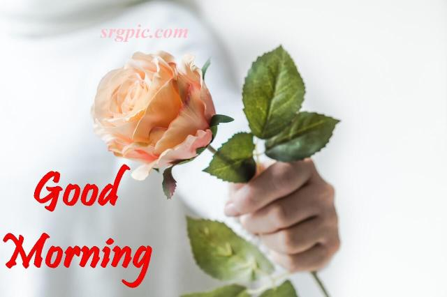 good-morning-with-rose2