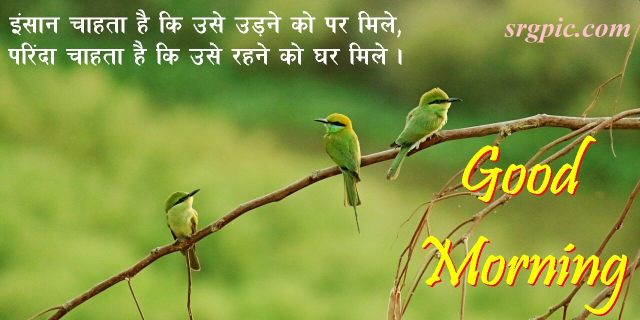love-birds-good-morning-images-1