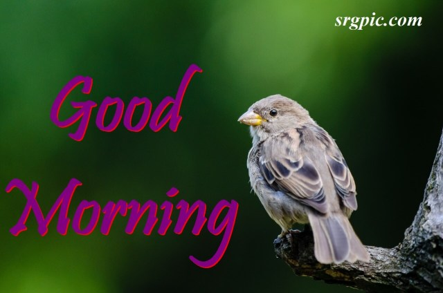 love-birds-good-morning-images-6