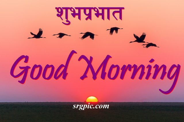 love-birds-good-morning-images-7