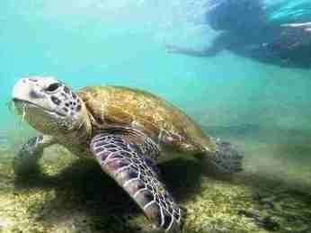 Snorkelling Polhena Madiha Coral Reef Turtle Coloursish Sri Lanka