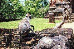 Sacred Quadrangle Vatadage Polonnaruwa Sri Lanka 18