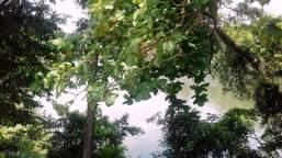 Kelaniya Temple Sri Lanka 16