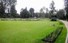 Peradeniya Royal Botanical garden Kandy