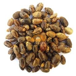 SriSatymev Castor Seeds | Arandi Beej
