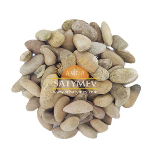SriSatymev Kanchan Seeds