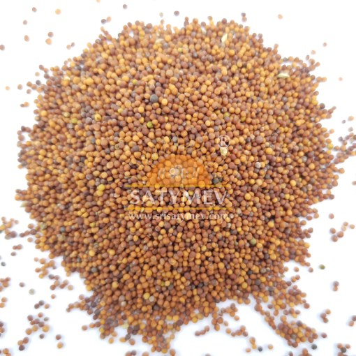 SriSatymev Turnip Ball Seeds | Turnip Seeds | Lal Shalgam