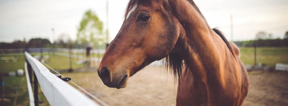 book-animal-brown-horse
