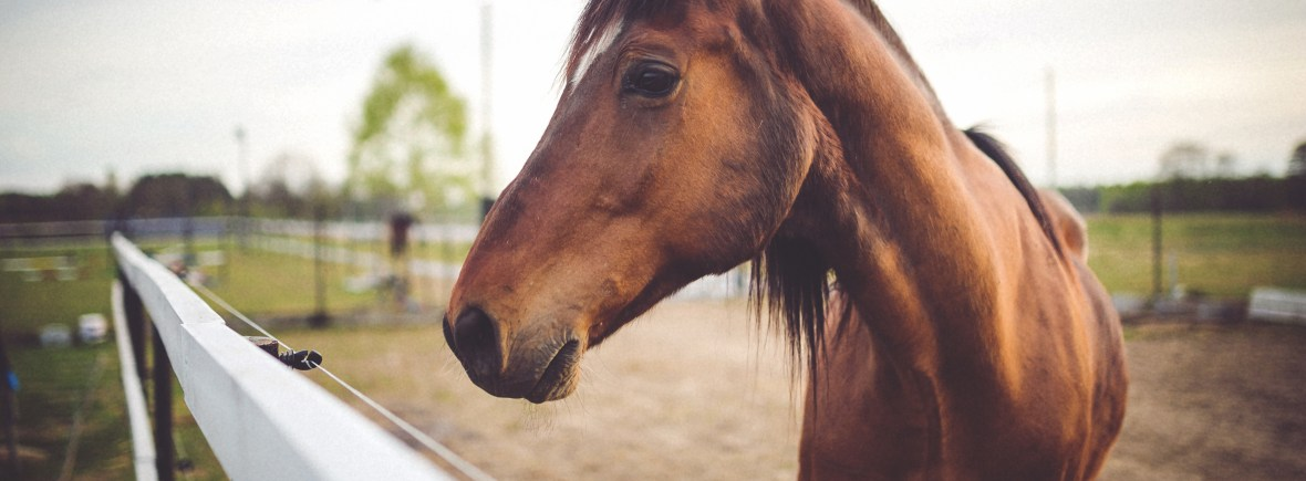 book-animal-brown-horse
