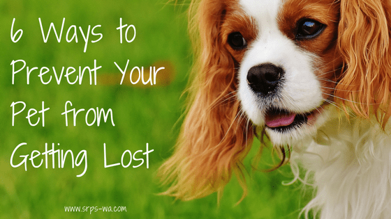 6 Ways to Prevent Your Pet from Getting Lost Blog POst