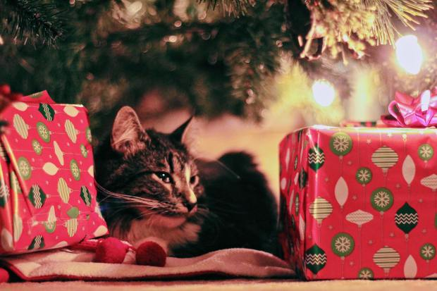 animal-boxes-cat-770012