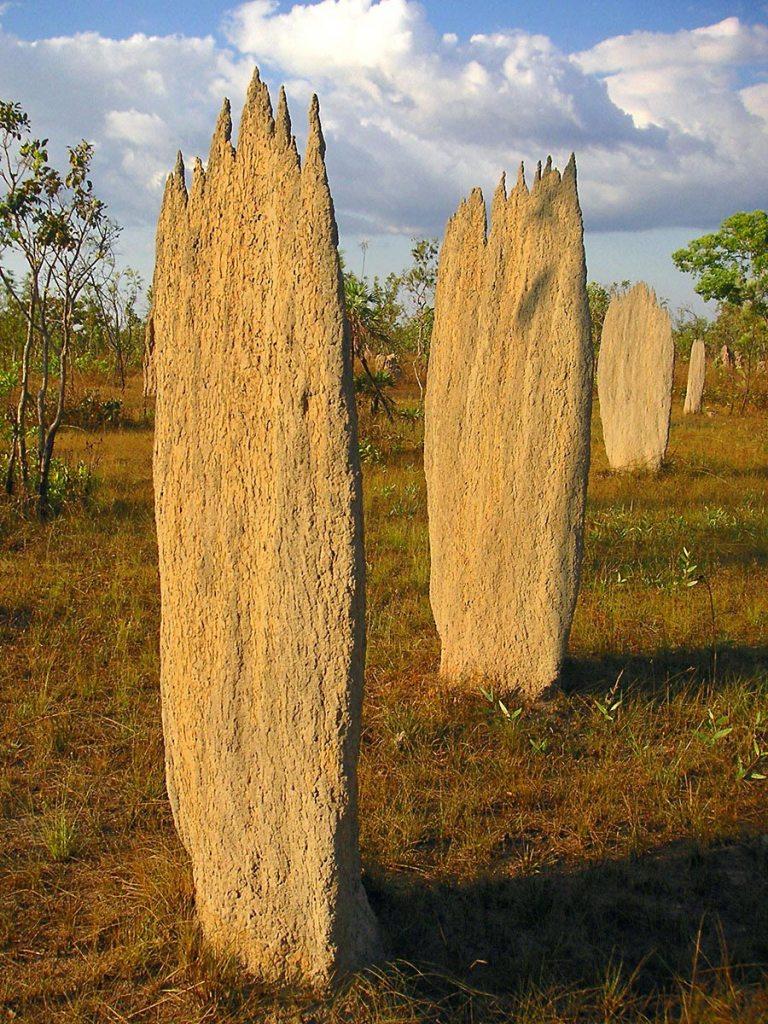 termitiere